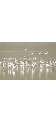 fototapeta flamingi 2