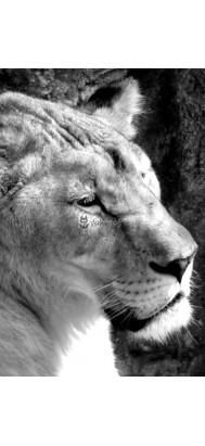 fototapeta lwica