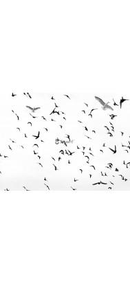 fototapeta ptaki w locie