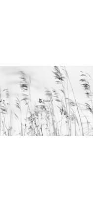 Fototapeta trawy