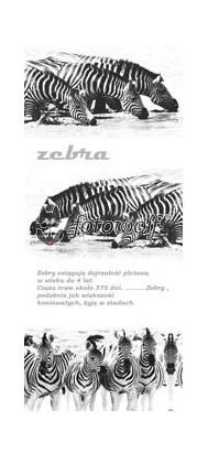 zwierzaki 0004